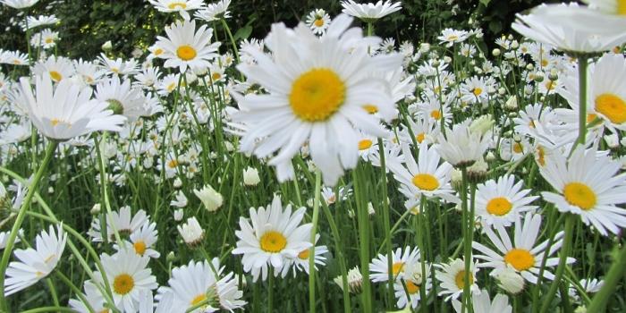 Blumen-Workshop