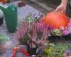Galerie:  Blumen Workshops